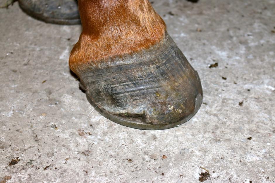 dåliga hovar häst
