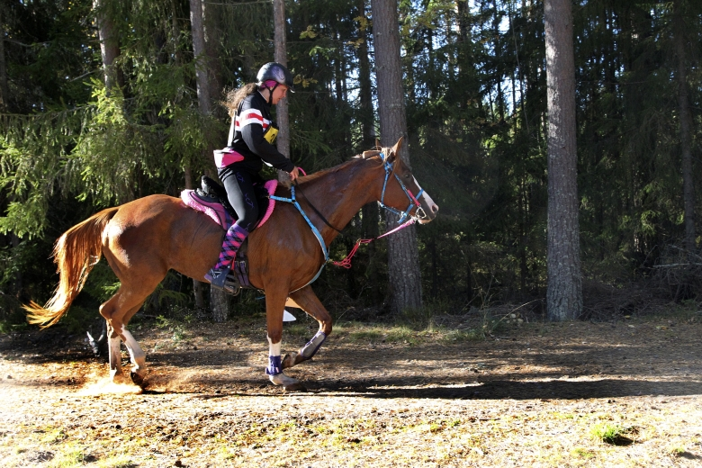 Förge detta arabgaloppören Jolie Trixler, ägd, tränad och riden av Emma Svanäng i Töreboda blev Årets 6-åriga unghäst i distansritt.