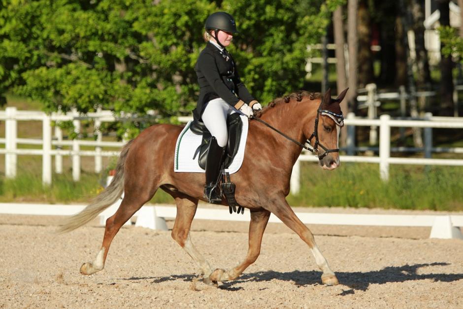NM- och EM-ekipagen i ponnydressyr klara