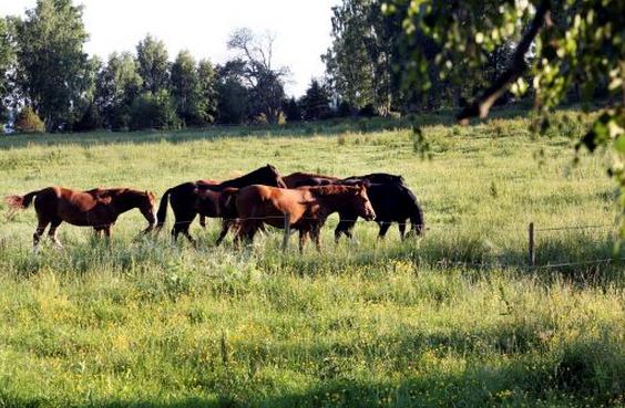 Hästhållning får jorden att må bra