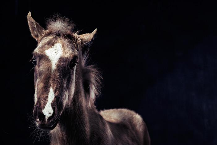 Foton med hästen i fokus
