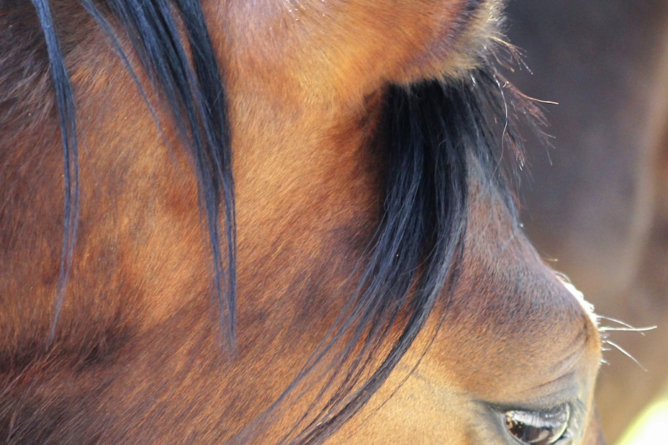 Lös hund skrämde ekipage – en häst död
