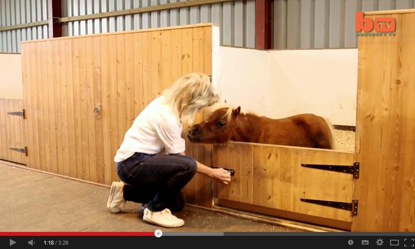 Dvärggen ger missbildade ponnyer