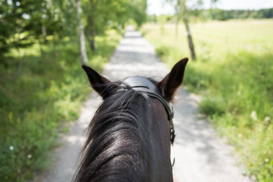 Pulsträna din häst med app