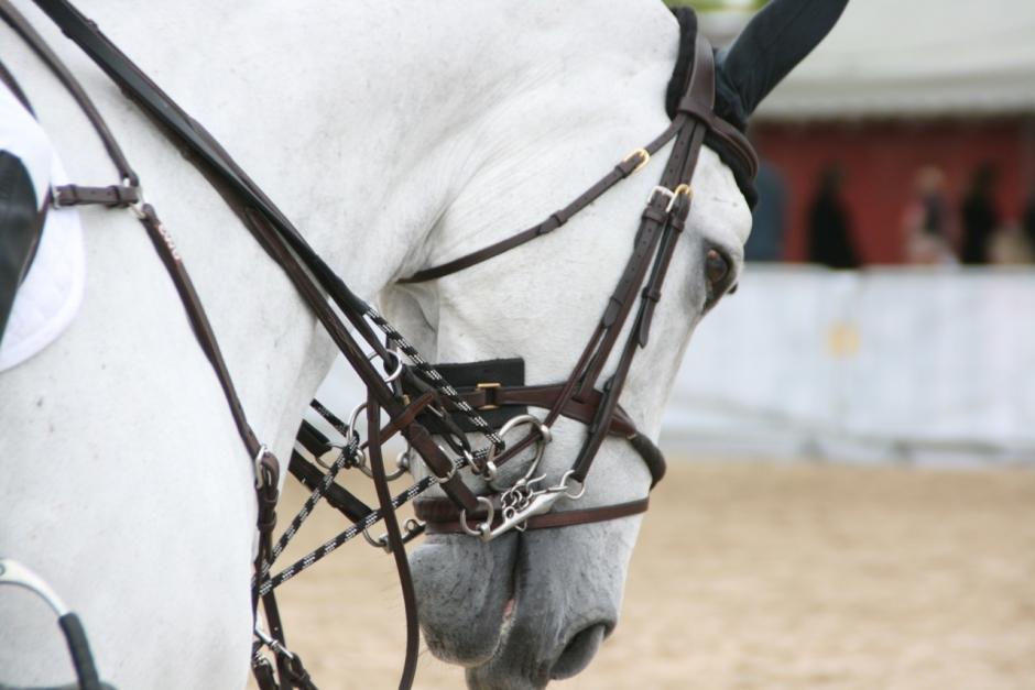 Ridsport ska utövas på hästens villkor