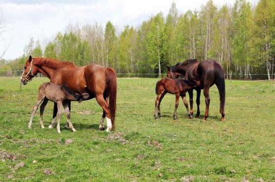 Ingen ålder på en häst…