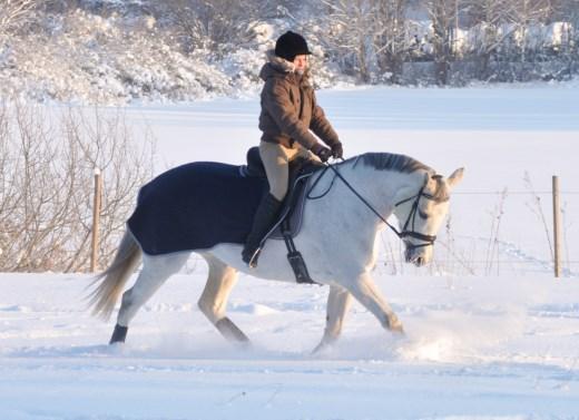 Styrketräna hästen i snön