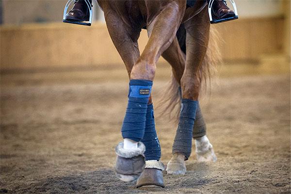 Ett steg i taget när hästen ska gå sidvärts