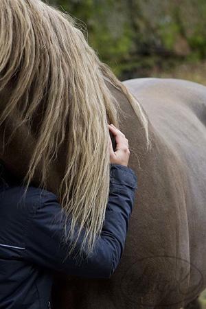 Hästarna hjälper människor tillbaka