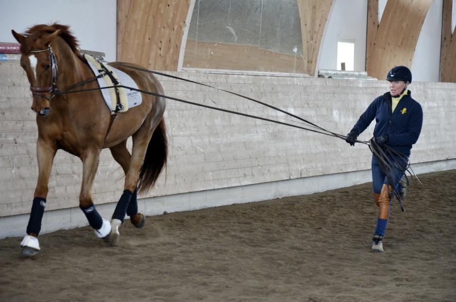 Grunderna måste sitta när du ska samla hästen
