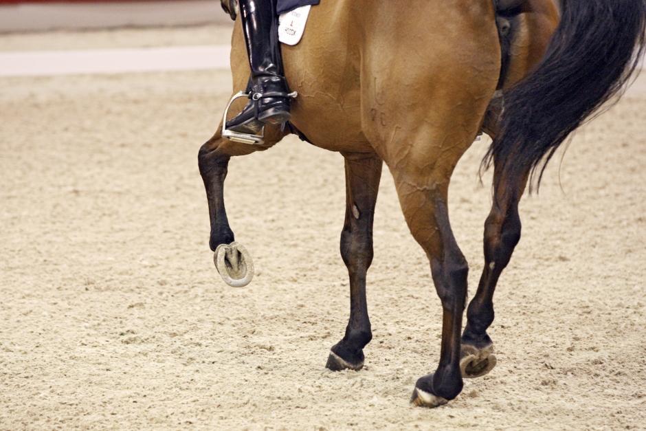 Vanligt med ojämna rörelser hos ohalta hästar