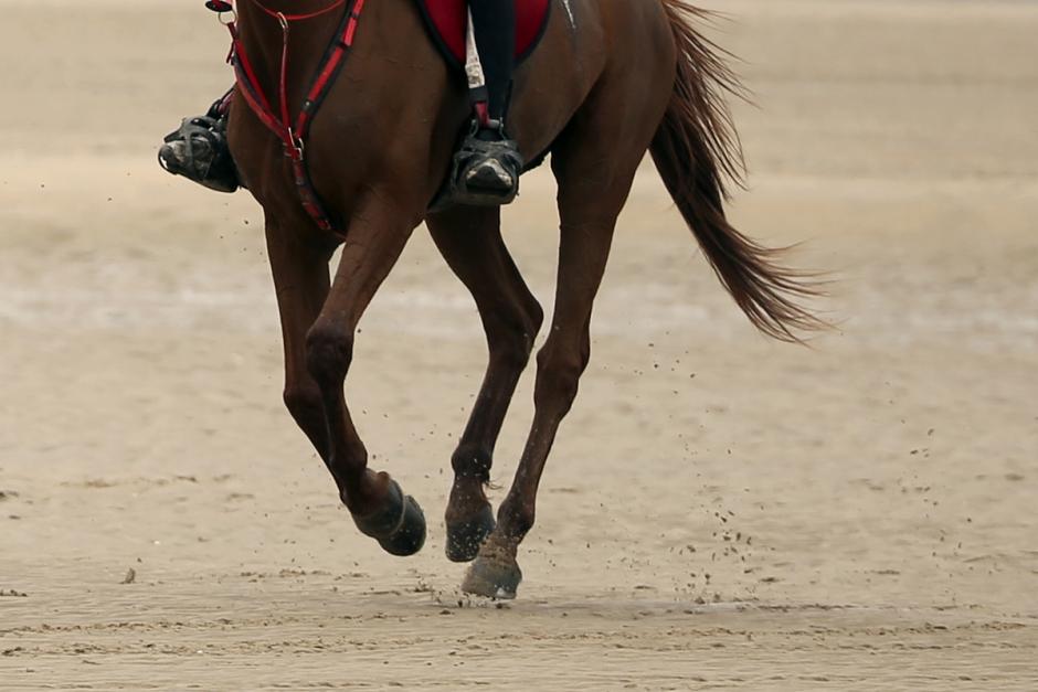 Svenskägd häst tävlade storlopp i Förenade Arabemiraten