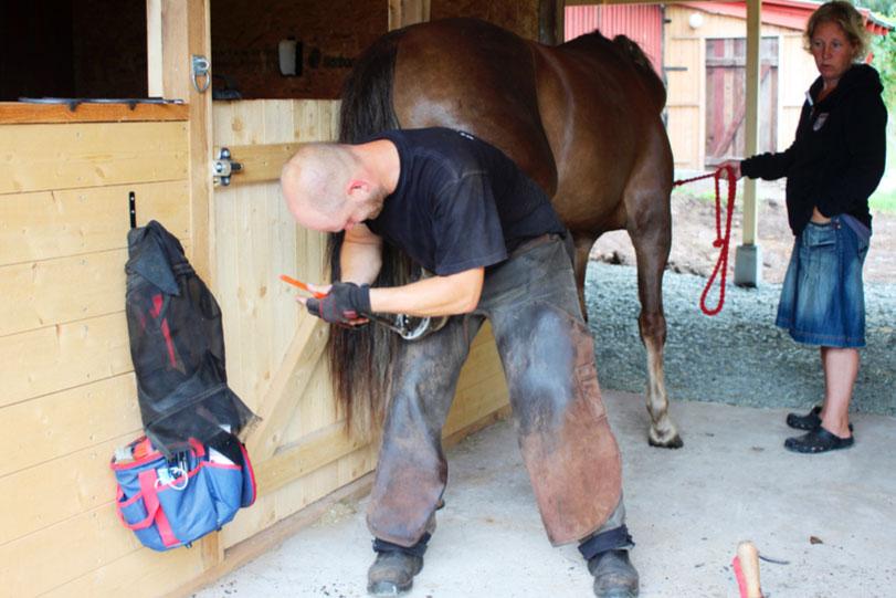 Känsliga hästar ger hovslagare problem