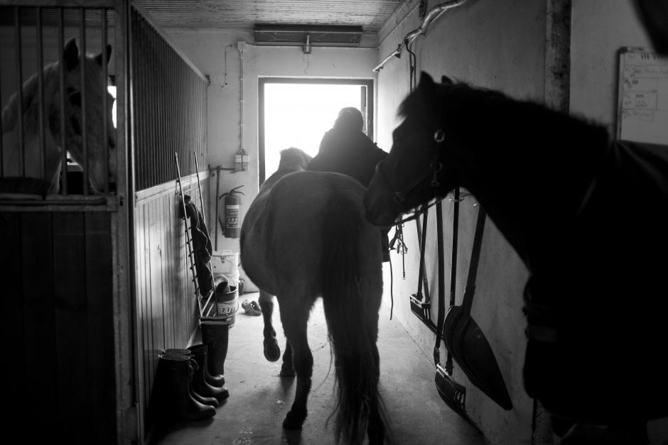 Färre slakterier tar emot häst