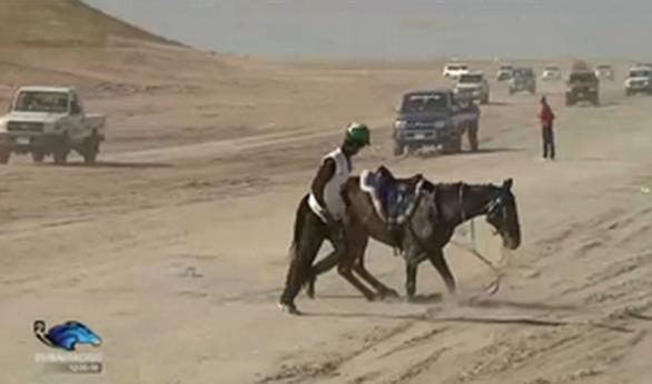 Tre hästar dog i distanslopp