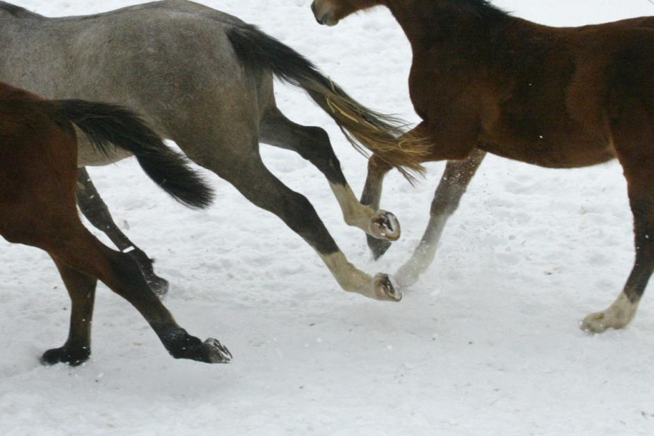 Kvinna till sjukhus efter krock med hästar
