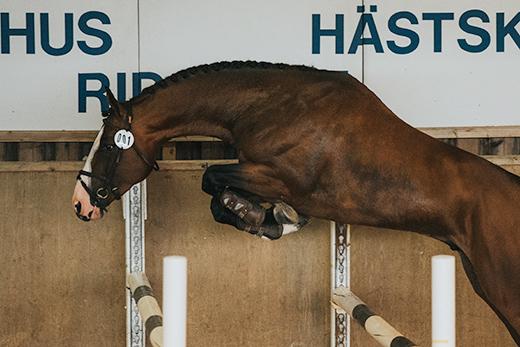 Höga poäng för Casanova Hästak