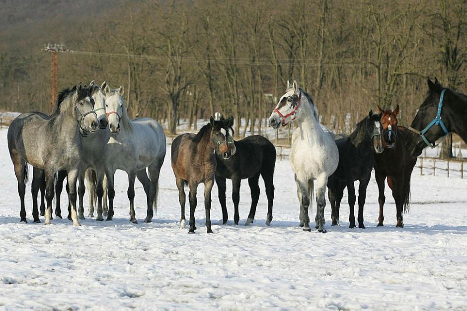En halv miljon hästar inlagda i Blå Basen
