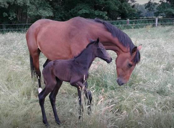 Silver-Wega har blivit mamma