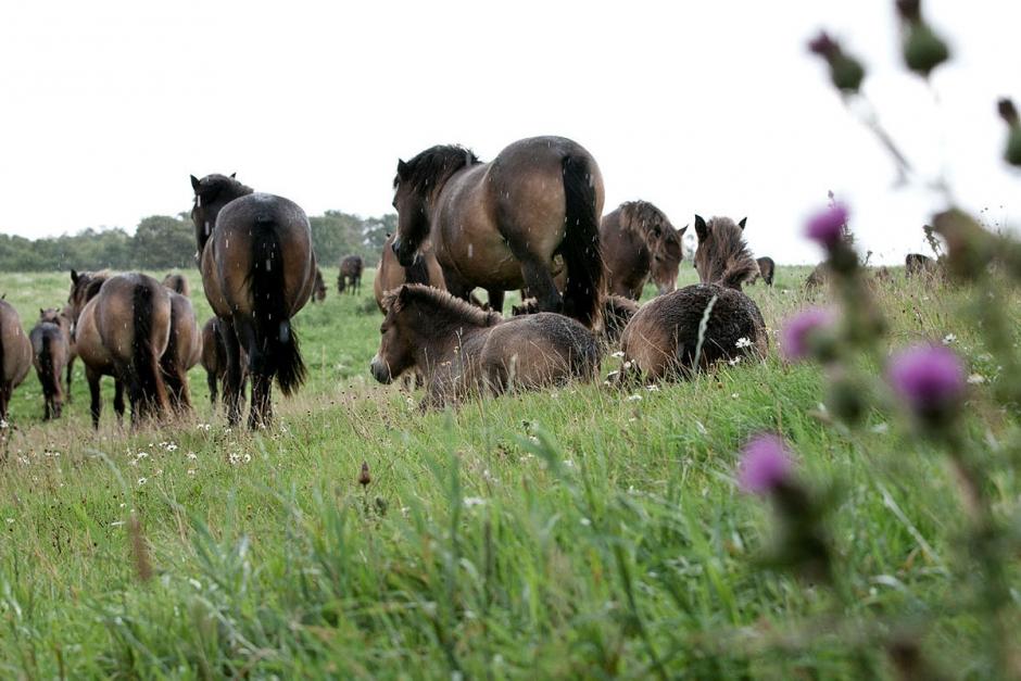 Hotet: Böter på 75 000 kronor för otillåten hästverksamhet