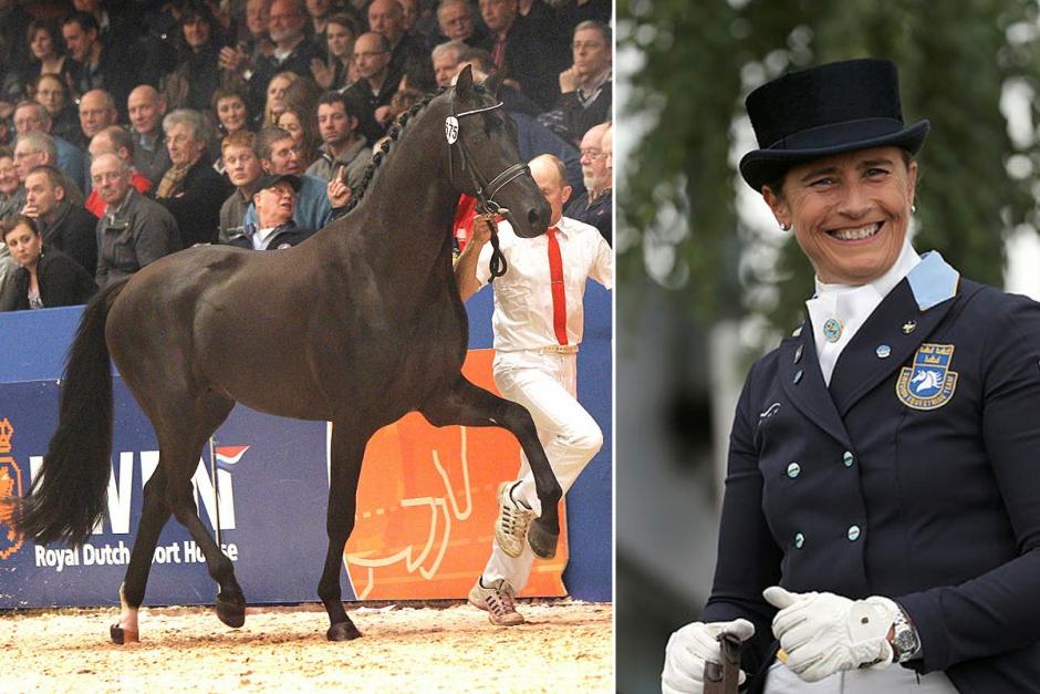 KWPN-segrare är Tinnes nya häst