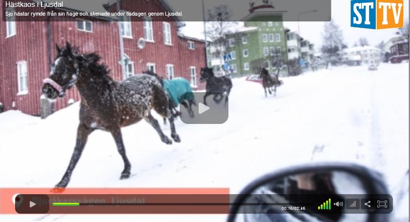 Hästar i sken genom centrum