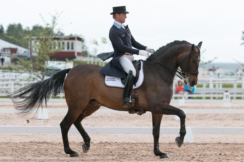 GP-hästen Weine till junior