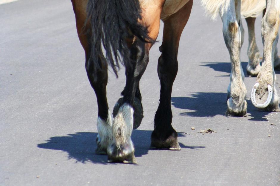 Hinder ska förhindra nya olyckor med häst