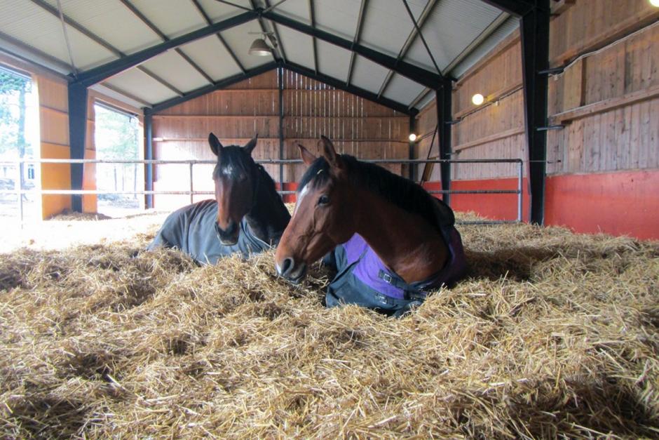 Grupphästhållning ger lyckliga hästar på ridskolan
