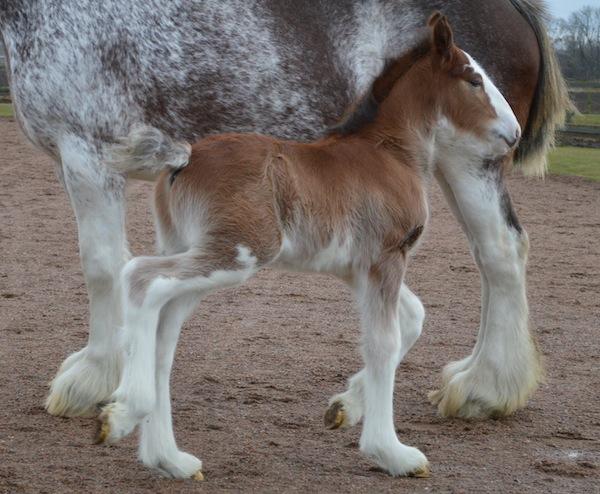 Herkules Enterprice hade bråttom till världen. Han är född på nyårsdagen, på bilden är han fyra dagar gammal.