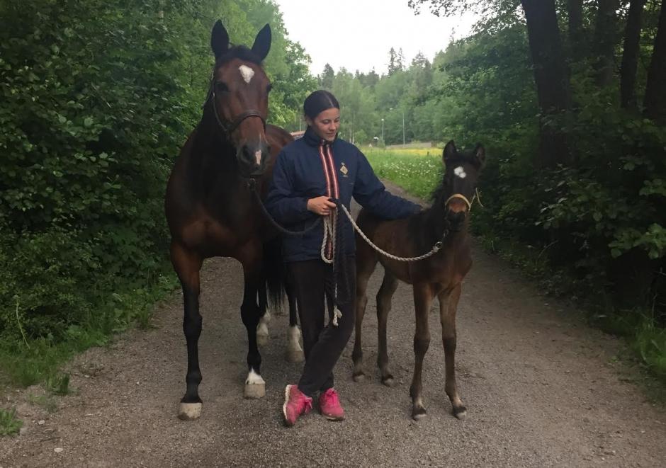 Emmas häst blev påkörd