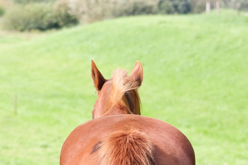 Hästar hittades döda i hage
